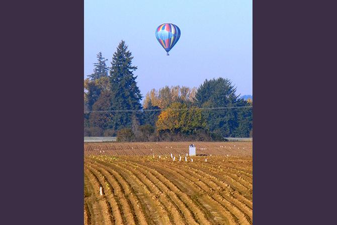 Ballon Over Autumn Iris Field