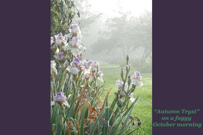 AutmnTryst-Foggy