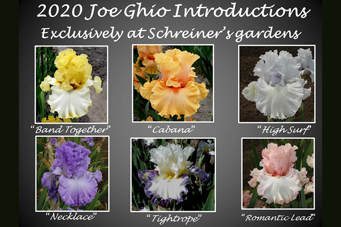 Joe Ghio 2020 Introductions