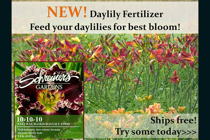 Daylily Fertilizer
