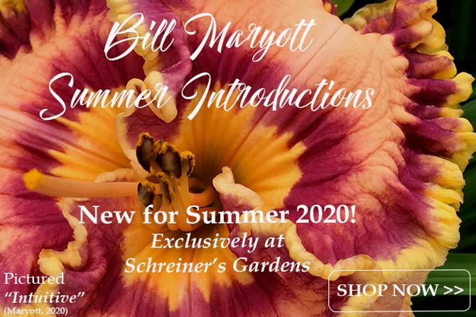 Maryott Summer 2020 Introductions