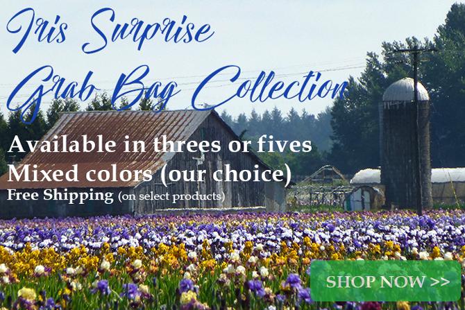 Iris Grab Bag Collections