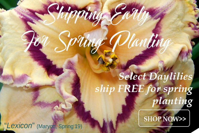 Free Shipping April Daylilies
