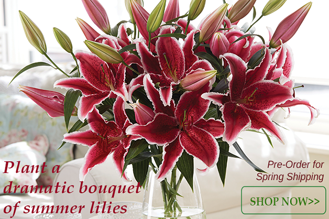Oriental Lily Collections Ship Free