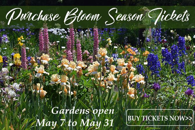 Bloom Season Ticket Sales