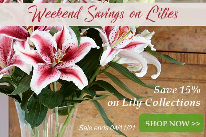 Oriental Lily Sale