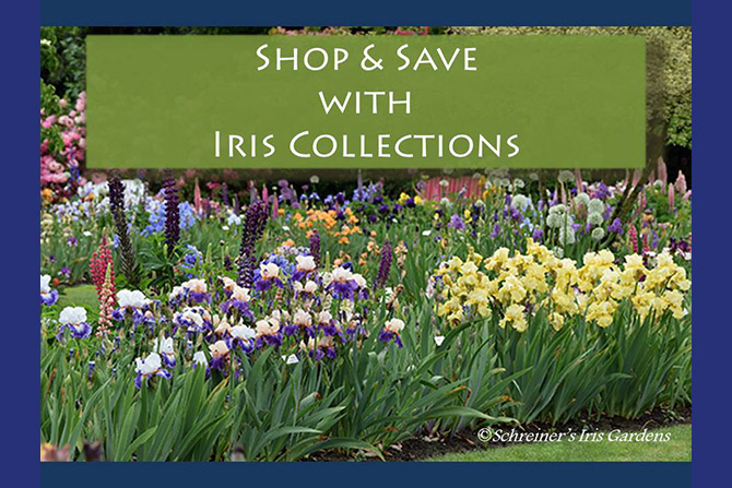 Shop and Save With Iris Collections