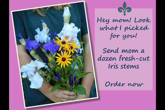 Mother's Day Iris Bouquet
