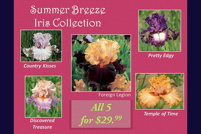 Summer Breeze Iris Collection