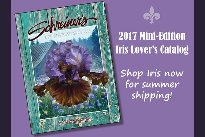 Shop Our 2017 Mini Edition Iris Catalog Now