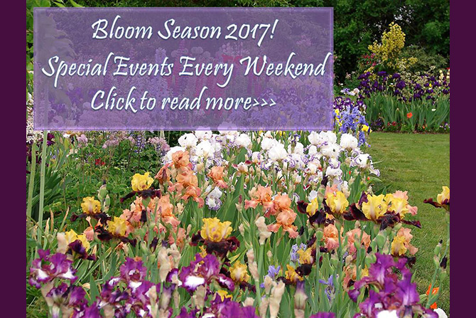 Iris Bloom Season Events 2017