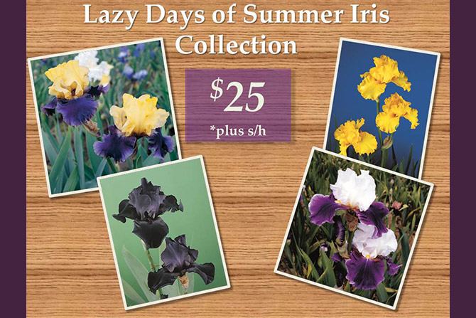 Lazy Days of Summer Iris Collection