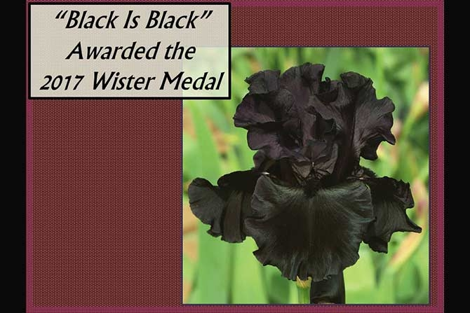 Wister Medal Winner Black Is Black
