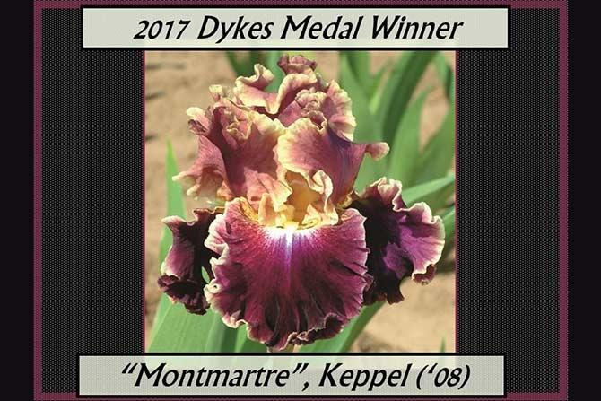 Dyke's Medal Winner Montmartre