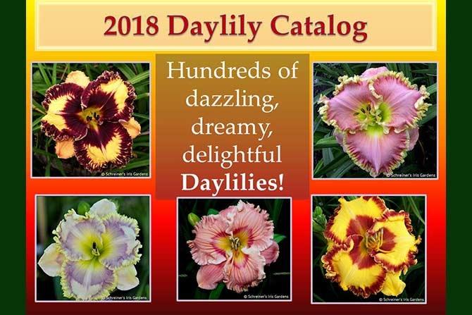 Daylily Catalog