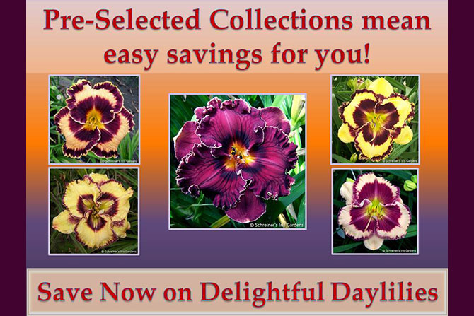 Daylily Collections Announce