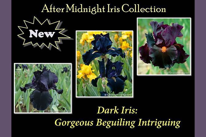 Dark Iris After Midnight Collection