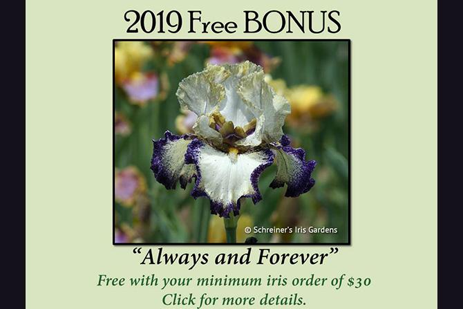 2019 Bonus Iris