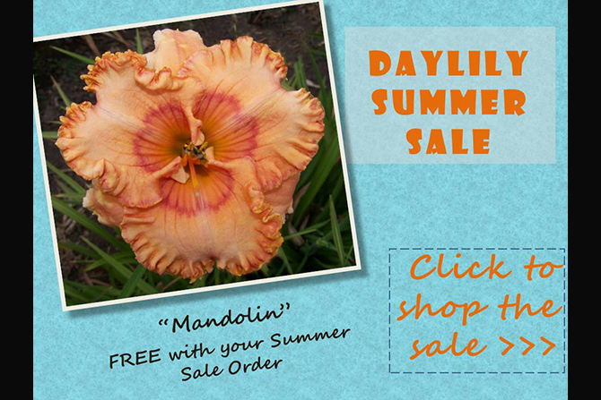 Summer Sale on Daylilies