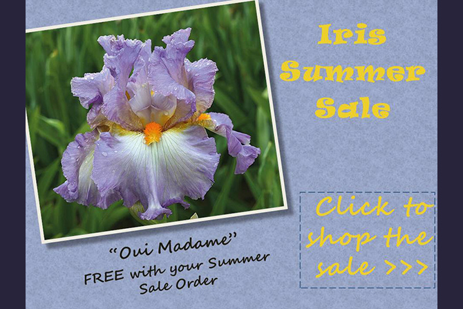 Summer Sale on Iris