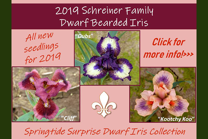 Schreiner Dwarf Intro Collection