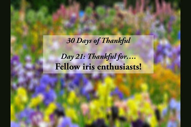 30 Days of Thankful Nov 21