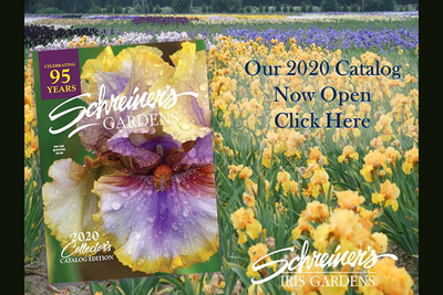 Shop Our 2020 Iris Lover's Catalog Now image