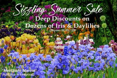 Summer Sale 2020 image