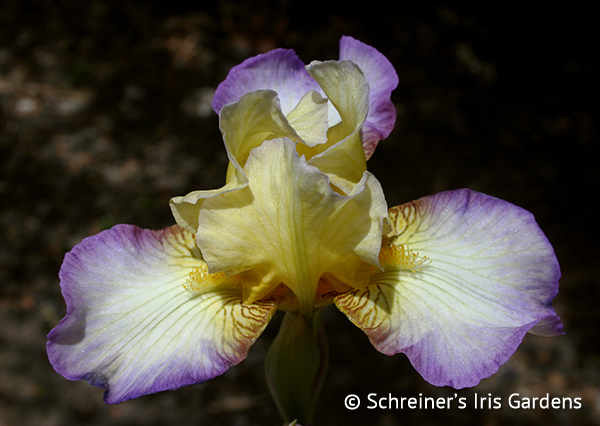 Please | Iris P-R