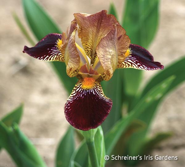 Petit Louvois | Border & Table Beaded Iris
