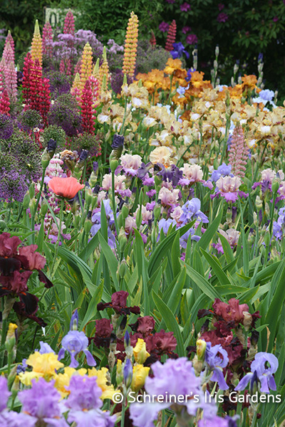 Garden Gems Iris Collection | Shop Iris Collections