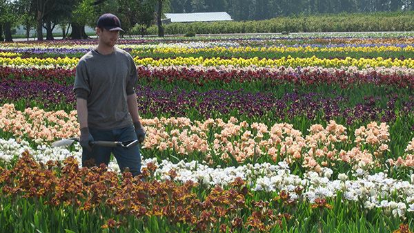 Intermediates Mix and Match Iris Collection | Shop Discounted Iris Collections