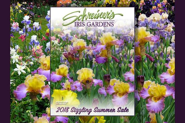 Sizzling Summer Sale 2018 image