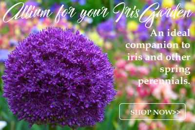 NEW! Collections of Allium image
