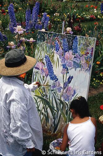 Artist's Palette Iris Collection | Shop Iris Collections