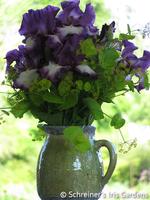 Image Blue and White Fresh Iris Bouquet