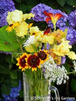 Image Reblooming Iris