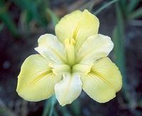 Image Yellow