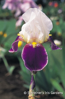 Image Historical Bearded Iris