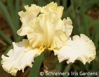 Image Cream Iris