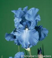 Image Fiesta In Blue