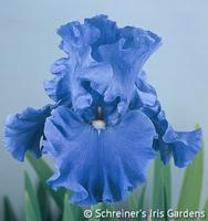 Image Jazz Me Blue