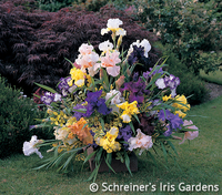 Image Mixed Color Iris Bouquet