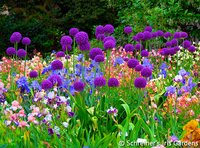 Image Mix and Match Allium Collection Free Shipping