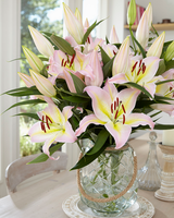 Image Five Lily Mix and Match Collection