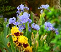 Image Patio Iris Collection