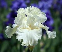 Image Americana Iris Collection