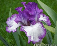 Image Double Your Pleasure Iris Collection