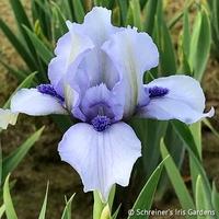 Image Forever Blue