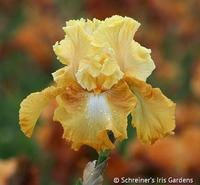Image Honeycomb